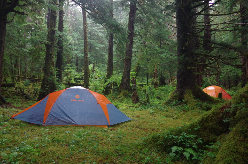 Two Marmot-brand tents set up in the temperate rainforest.