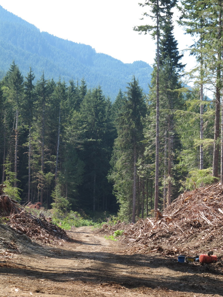 Image of logging road near Lake Crescent