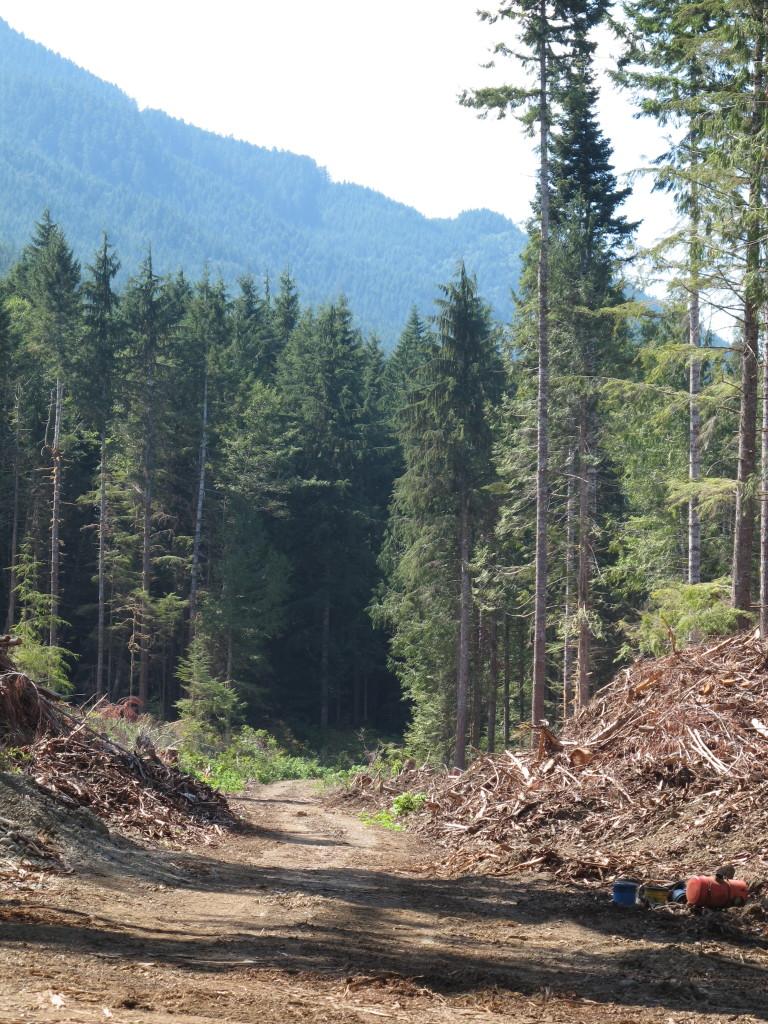 Image of logging road near Lake Crescent