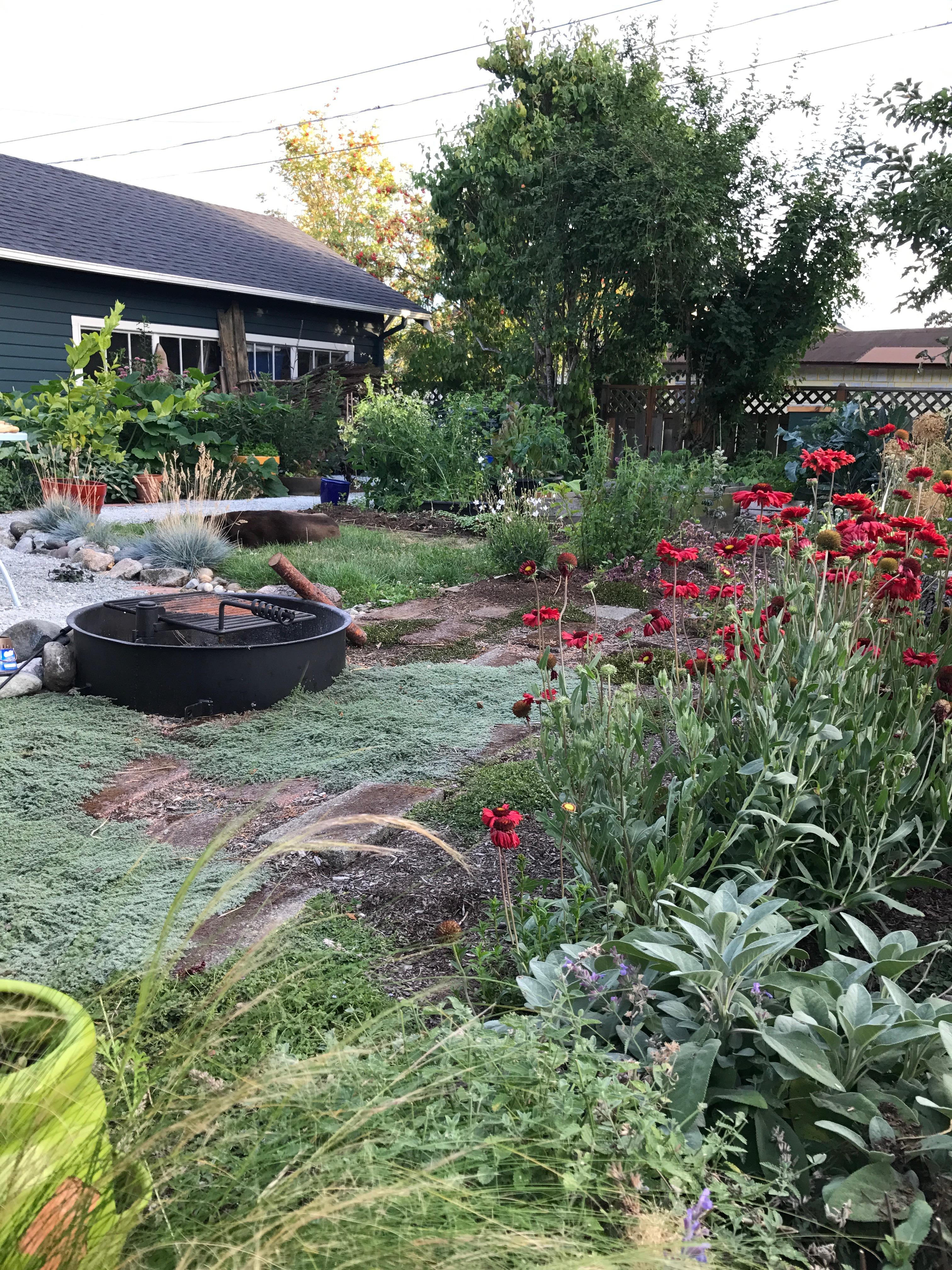 Photo of garden: firepit, gaillardia, Mexican feather grass