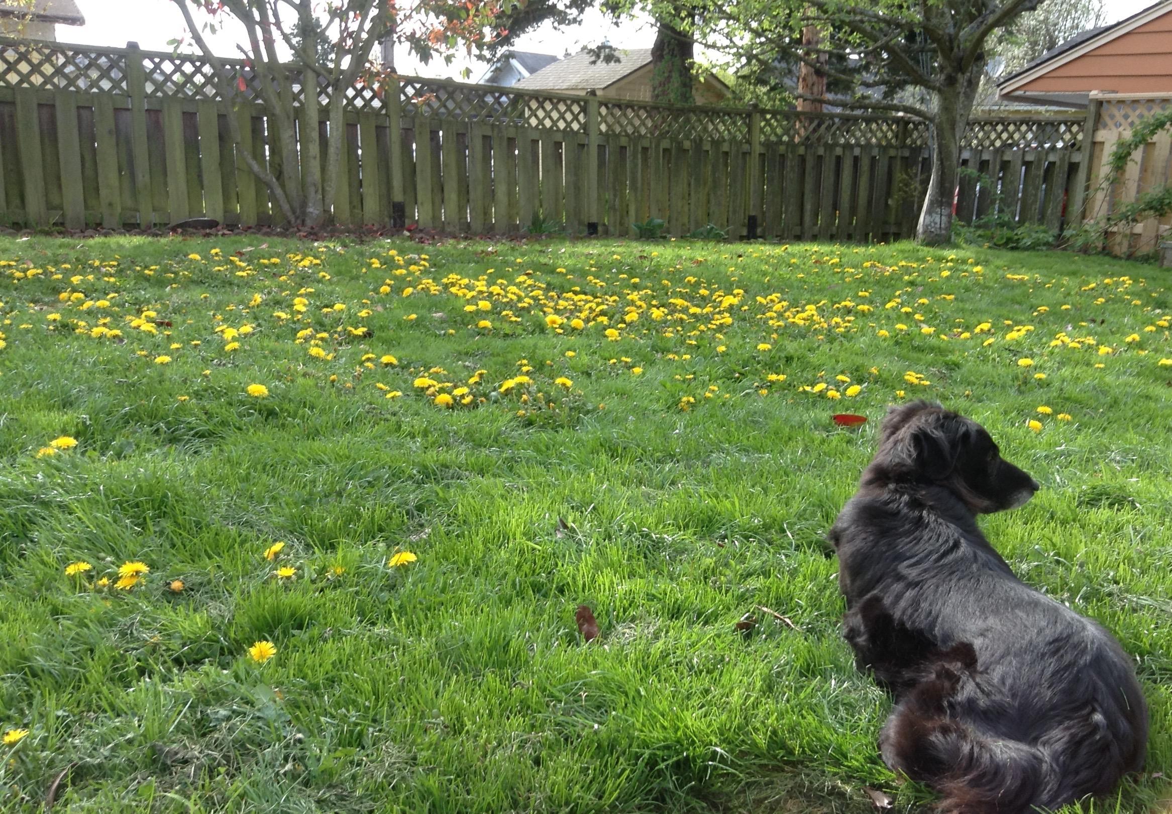 Dog in weedy yard